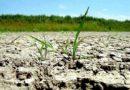 Lipsa precipitațiilor a afectat culturile de primăvară de primă urgență