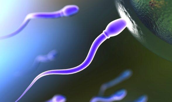 Primăria Târgu Mureș a dat-o pe fertilitate