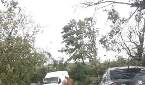 Copaci doborâți în județ, accident la Luduș