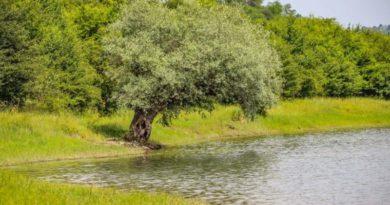 (Foto) Peisaj de poveste la Bezid