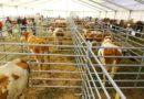 Expoziţie agricolă la Acăţari