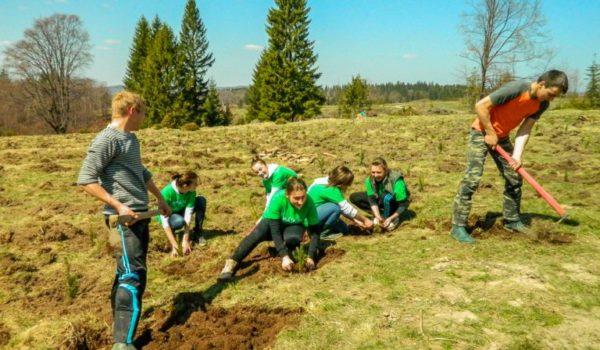 """Fundația Mihai Eminescu Trust va ajunge în 2020 la 2.500.000 de puieți plantați în cadrul proiectului """"Plantăm pentru viitor"""""""