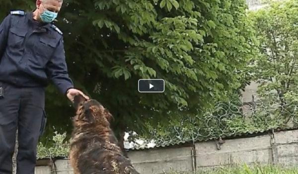 Un câine jandarm își caută familie după pensionare