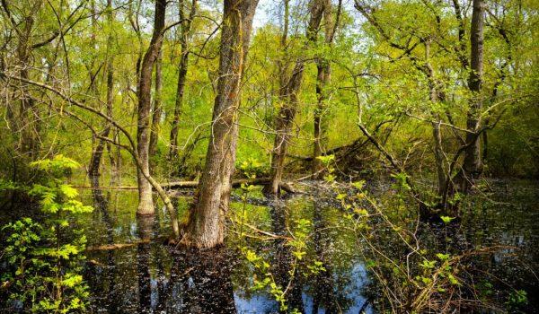 Pădurea Letea – cea mai veche rezervație naturală din România