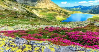 Parcuri naționale și parcuri naturale de vizitat în România